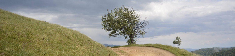 Teregova